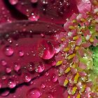 Glitterati by Deborah  Bowness