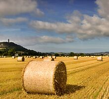 Scrabo Tower Bales Co Down Ireland by Sean Monaghan