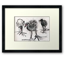 Chicks. Framed Print