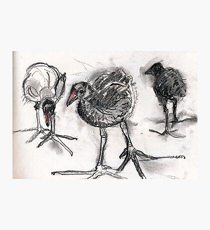 Chicks. Photographic Print