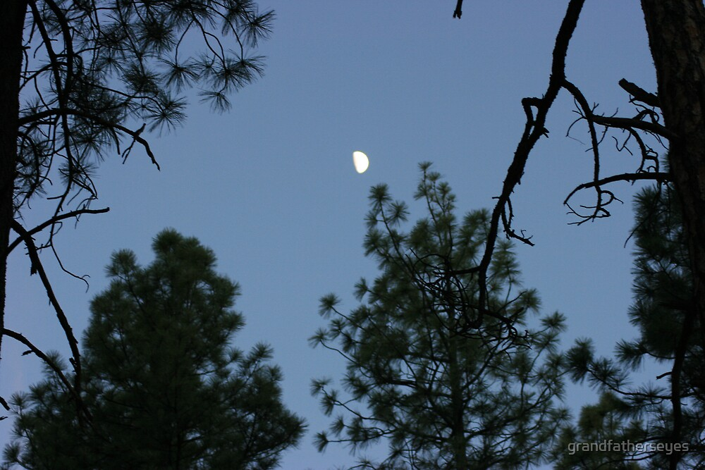 Moon through forest by grandfatherseyes