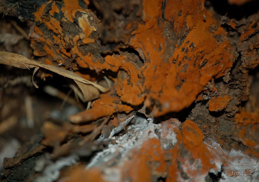Looking in a tree by frosty12