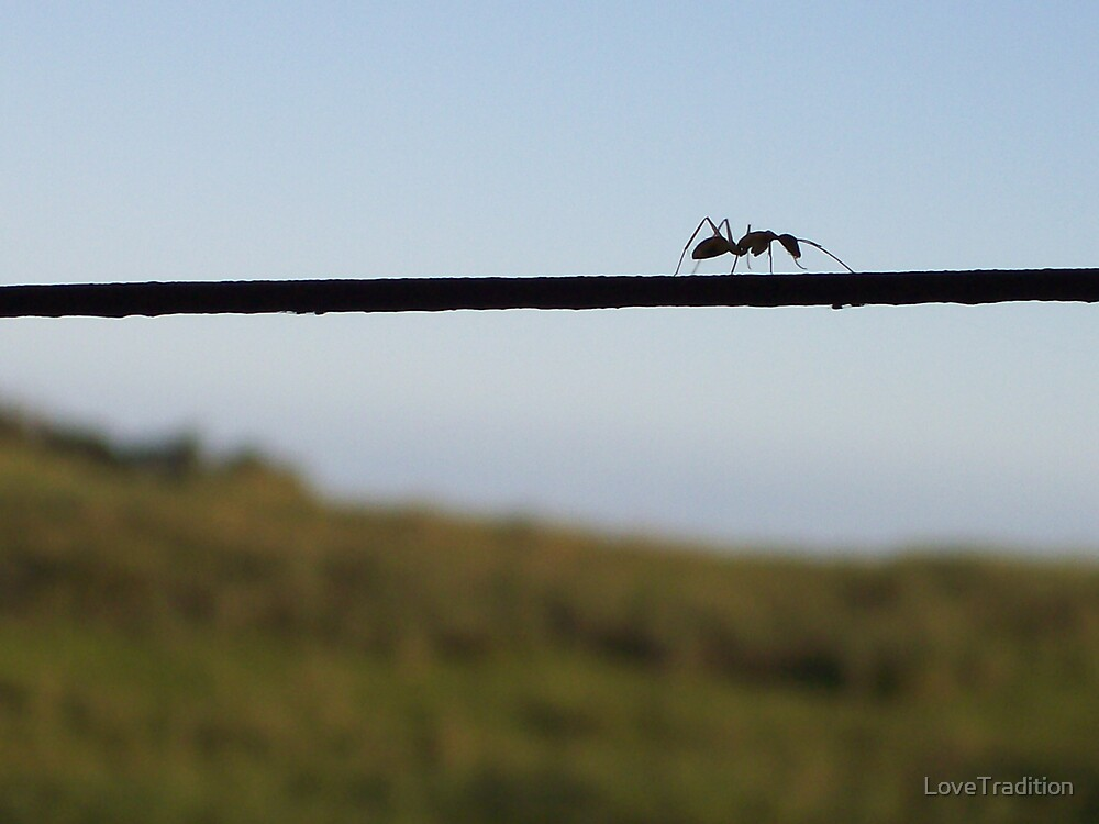 Ant Walk  by LoveTradition