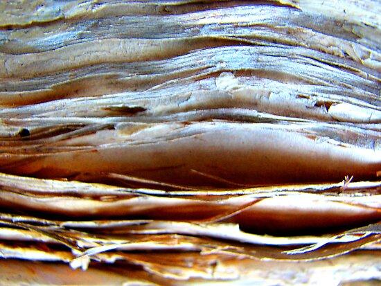 Moonlit Desert by Kathie Nichols