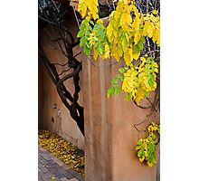 Twisted Autumn Leaves CV Photographic Print