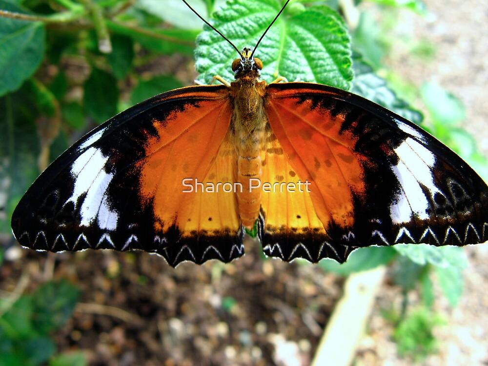 Butterfly on fire by Sharon Perrett