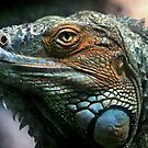  Iguana by Lance Leopold