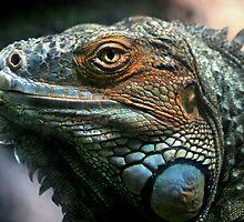 Iguana by Lance Leopold