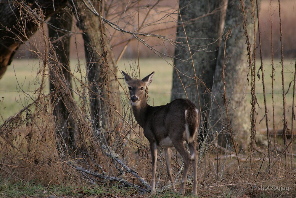 Whitetail Doe by shotzbyjay