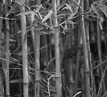 Bamboo by PhotoNinja