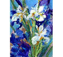 Iris Garden II Photographic Print