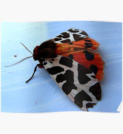Garden Tiger Moth - 2 Poster