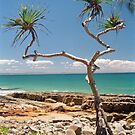 narrly pandanus by caroline ellis