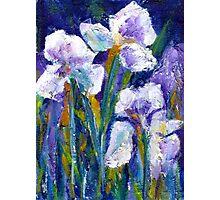 Iris Garden I Photographic Print