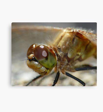 Dragonfly,  Portrait Canvas Print