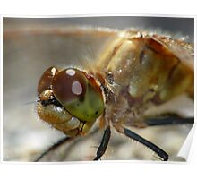 Dragonfly,  Portrait Poster