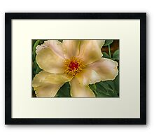 Clematis in HDR Framed Print