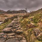 Follow Me  by Darren Wilkes