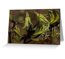 The Black Kangaroo Paw makes a stunning card to give on any occasion. Greeting Card