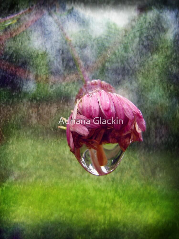 Rain by Adriana Glackin
