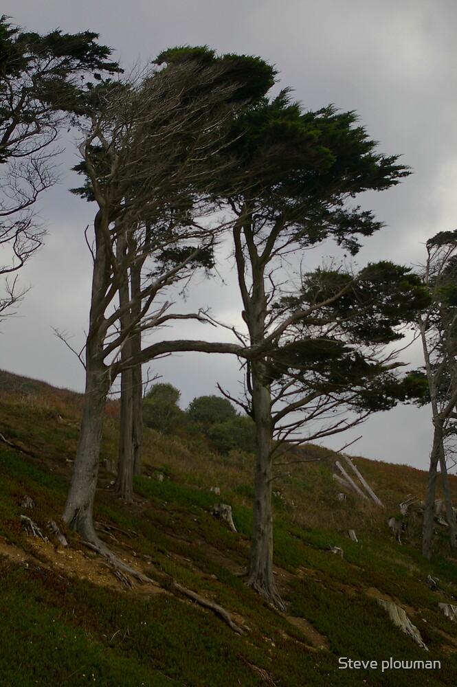 Wind blown by Steve plowman