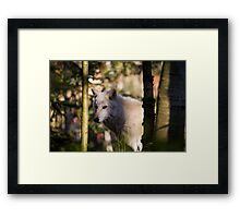 A White Wolf in the Forest Framed Print