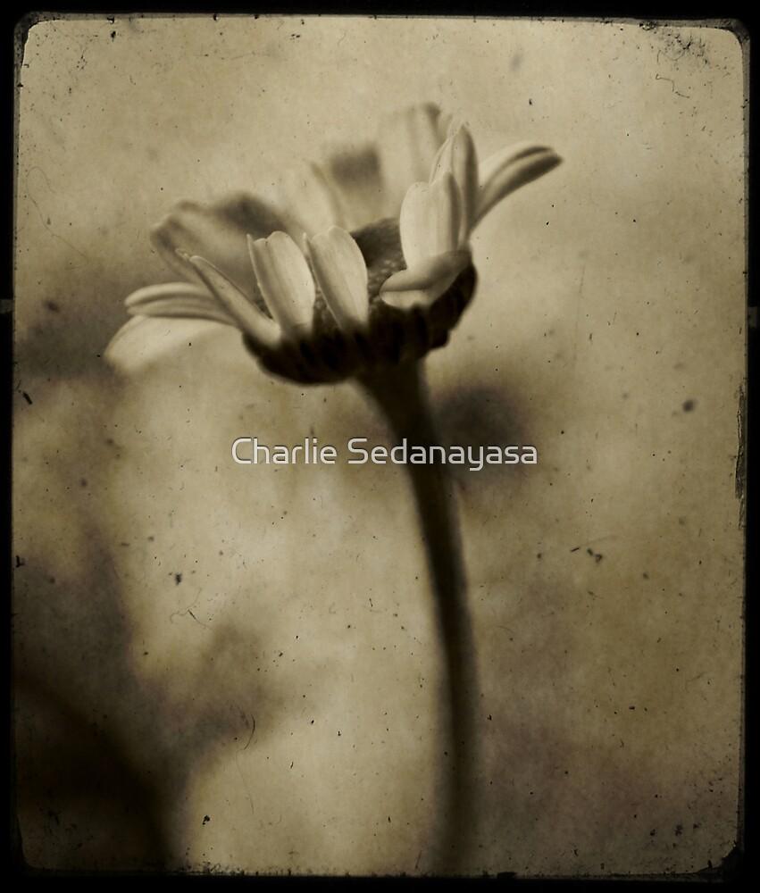 fragile... by Charlie Sedanayasa