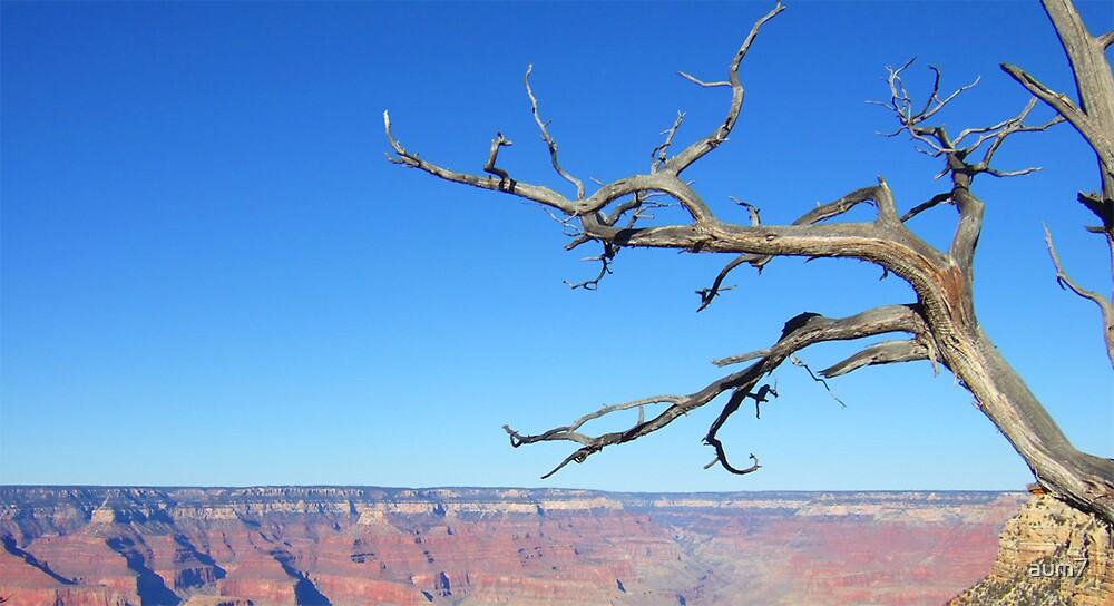 Grand Canyon no.1 by aum7