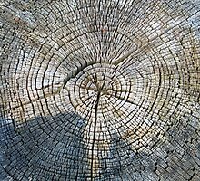 Old tree cross section - years go by by Ron Zmiri