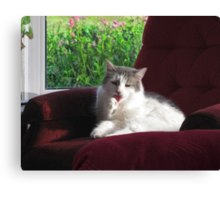 SAMMY GROOMING HIMSELF BUT LOOK..DO U SEE WHAT I SEE...LOOK CLOSE HIS TONGUE LOOKS LIKE A HEART..SWEET..AW.. Canvas Print