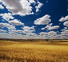 Golden Harvest by KathyT