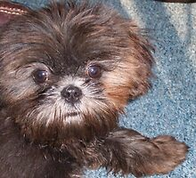 puppy love Im sorry by JILLIAN  POSSEHL