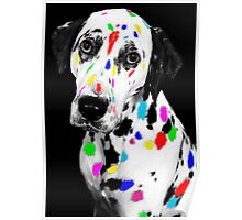 Multi-coloured Dalmatian Poster