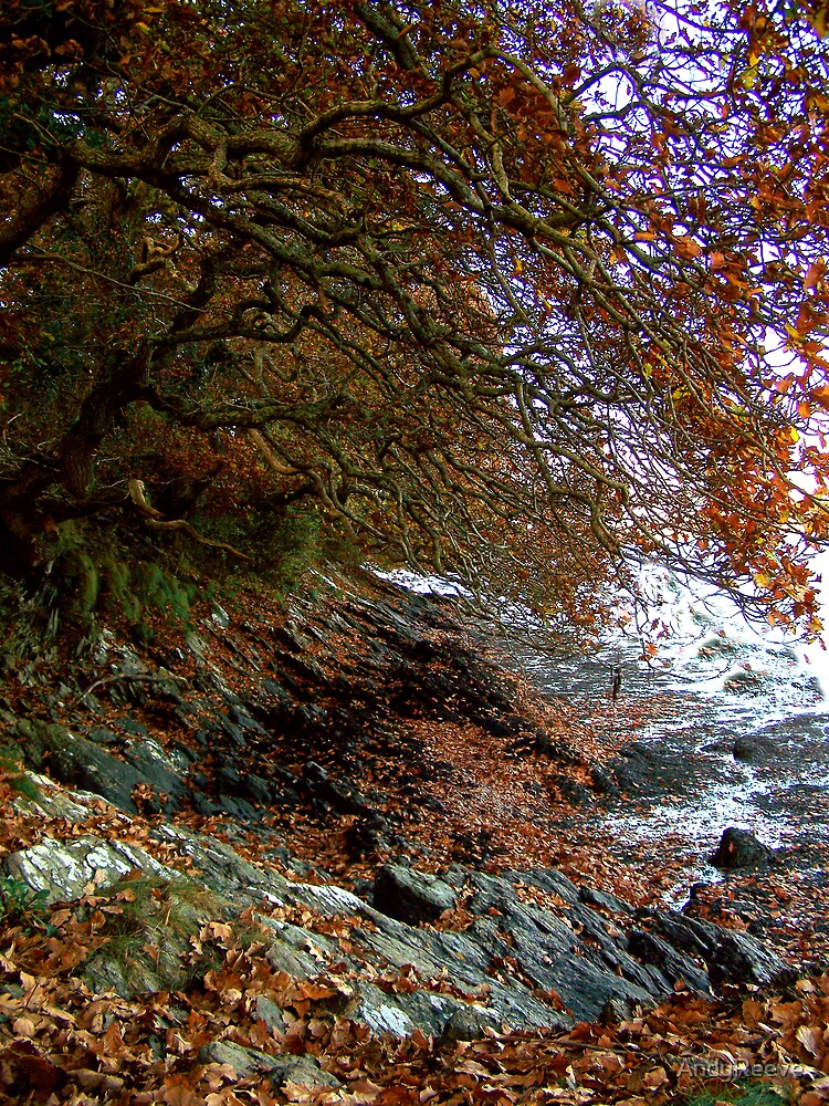 Autumn by the River. by AndyReeve
