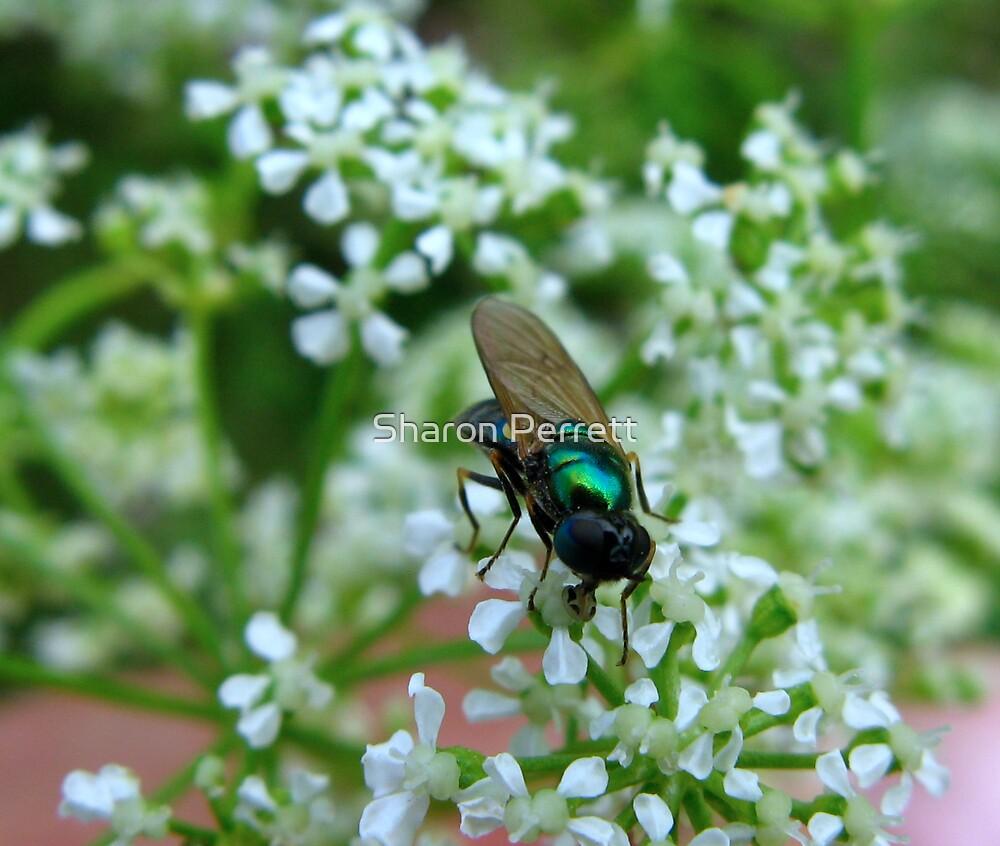 Fly n' Flower by Sharon Perrett