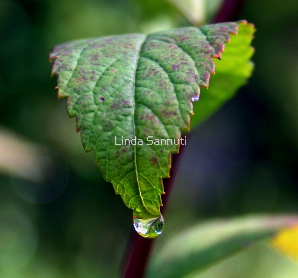 leaf drop by Linda Sannuti