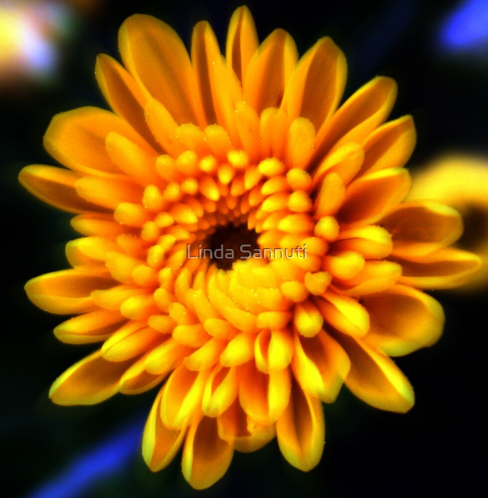 yellow beauty  by Linda Sannuti