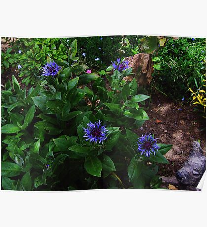 Corn Flowers (with dog) Poster