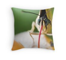 Crazy Butterfly Throw Pillow