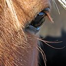 Scotch Extreme Closeup by angelandspot