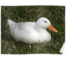 Sitting Duck Poster