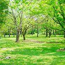 Hidden Forest by Sarah Cook