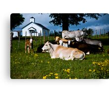 Holy Cows Canvas Print