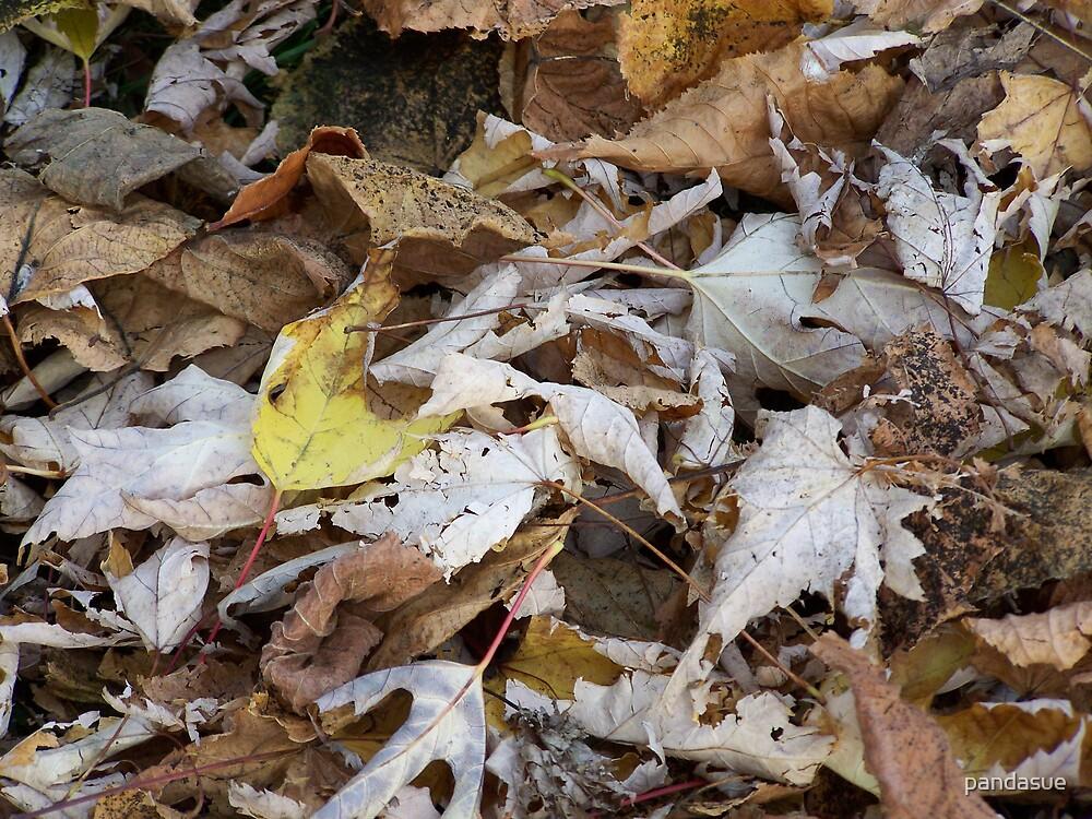 leafs by pandasue