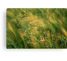 Grass in the Wind Canvas Print