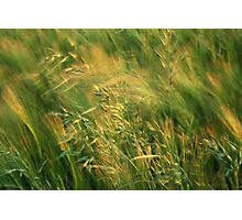 Grass in the Wind Photographic Print