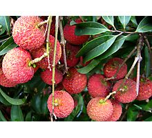 Lychee Fruit Photographic Print