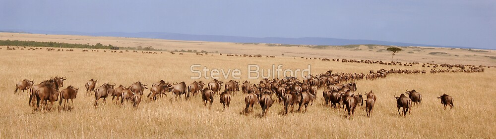 Migration by Steve Bulford