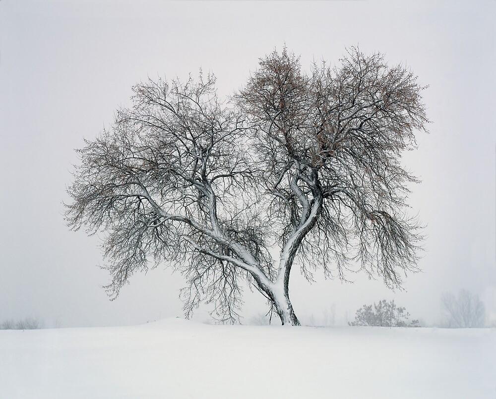 Blizzard by mymamiya