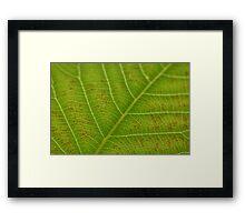 Leaf Patterns Framed Print